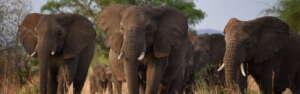 africanwalkingadventures